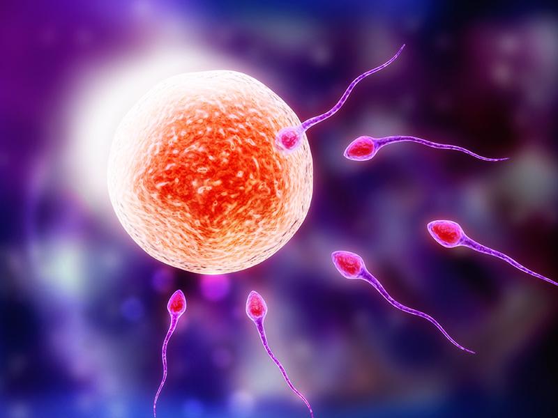 σπερματεγχυση η εξωσωματικη γονιμοποιηση800χ600